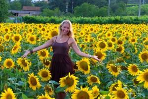 Silvia Sunflowers